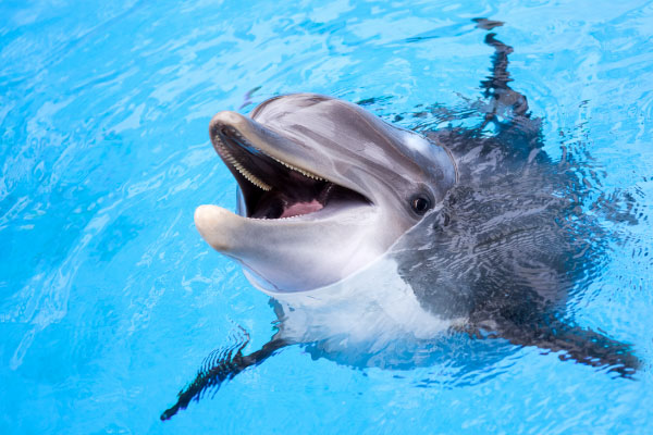 Canada passes law banning holding dolphins and whales in captivity