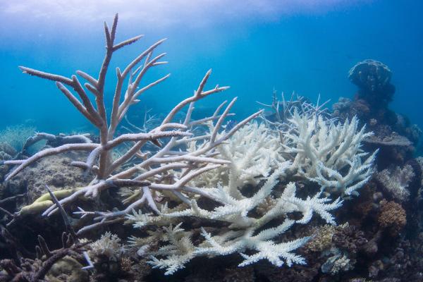 Severe damage to planet biodiversity