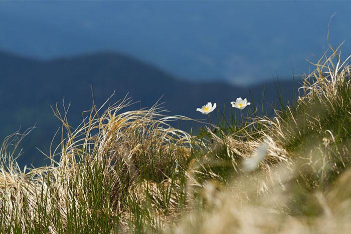 two flowers on field