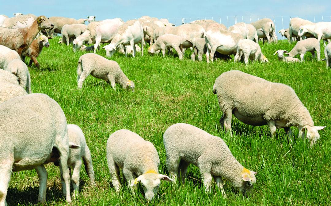 Freedom for Farm Animals!